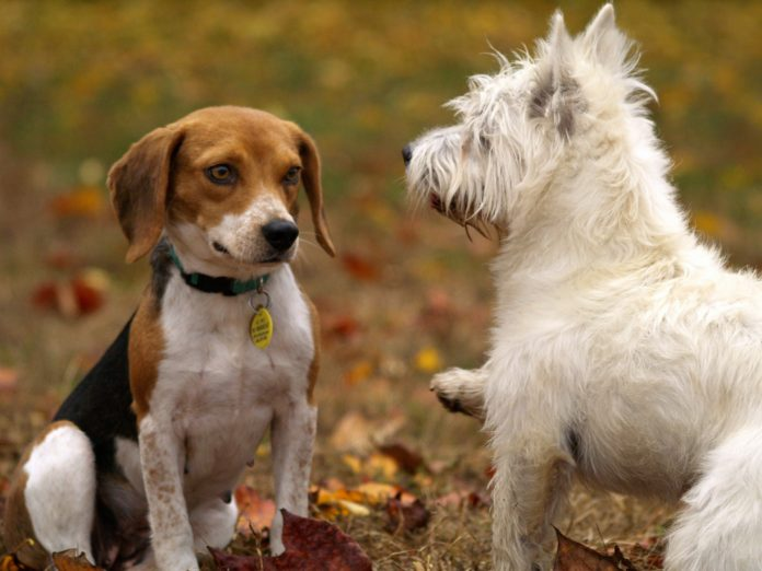 Pets in Autumn