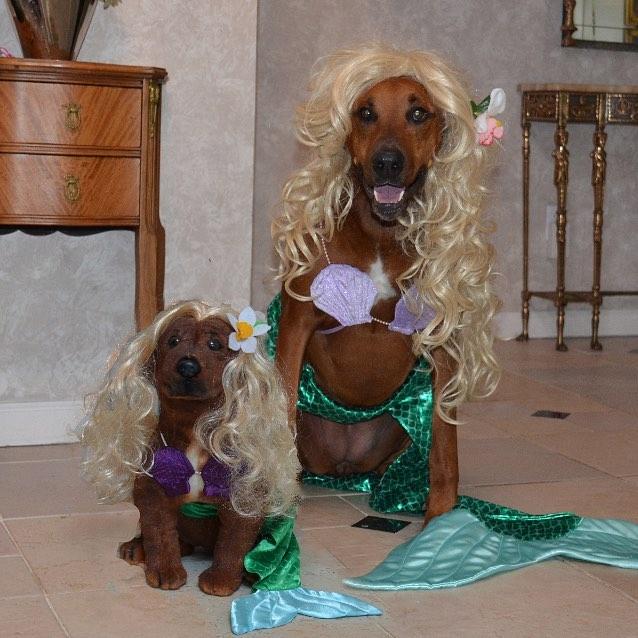 Zucca in a Mermaid Costume