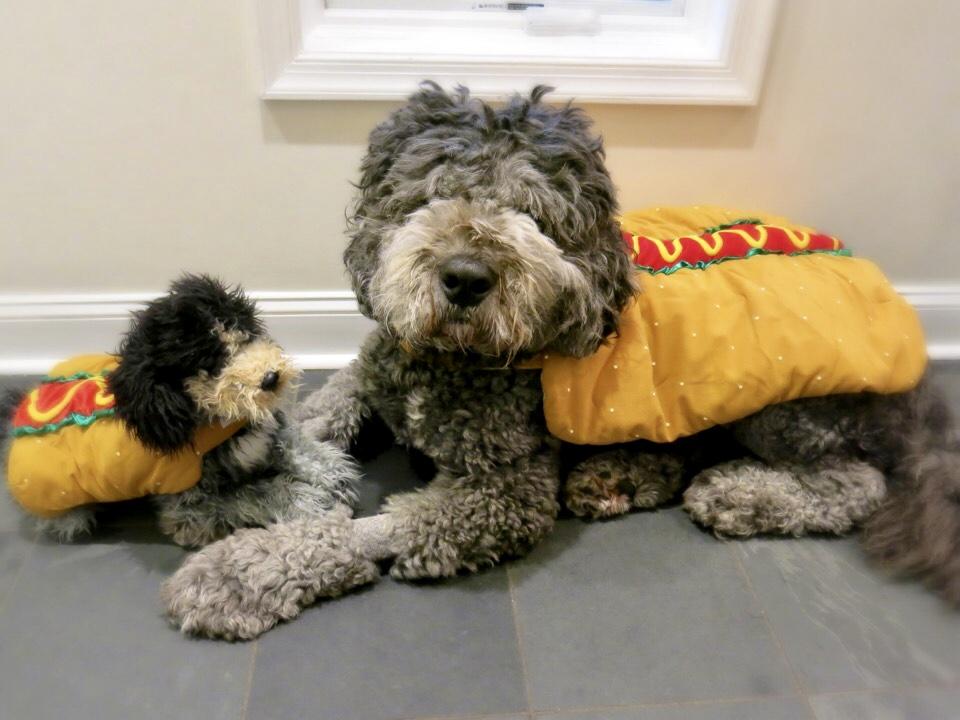 Dog in Hotdog Costume