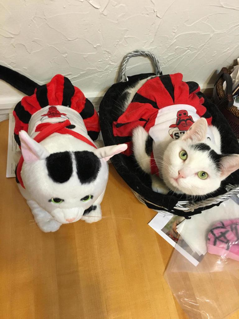 Cat in Bulls Costume