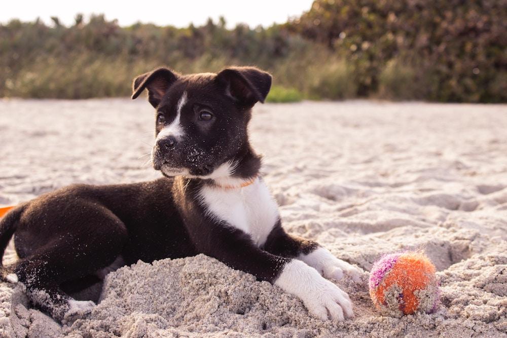 Puppy Day Ideas