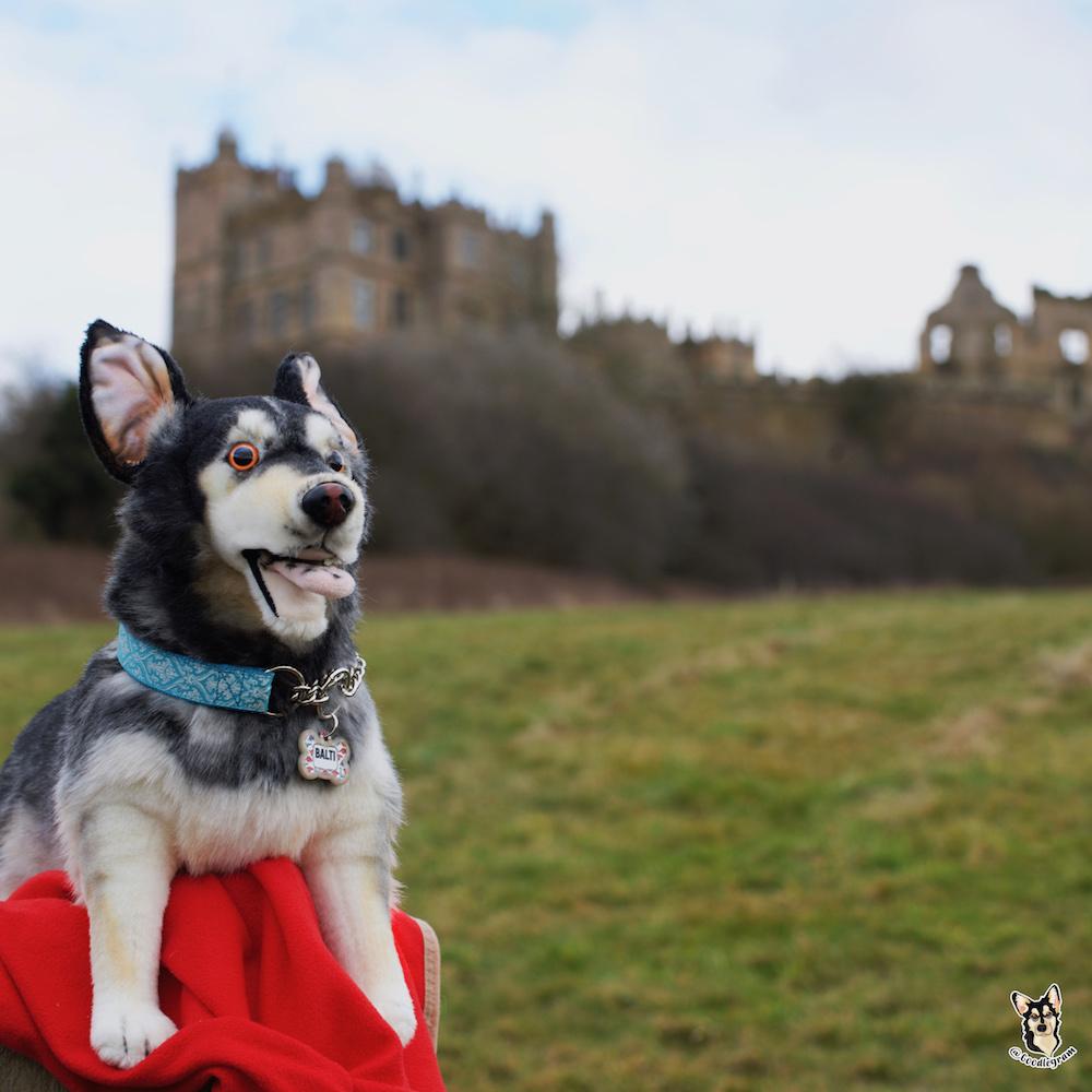 Baltsie Petsies visits a castle