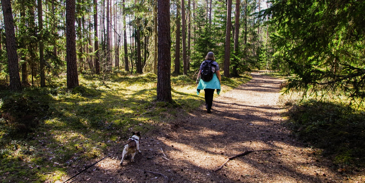 things to do with your dog hiking