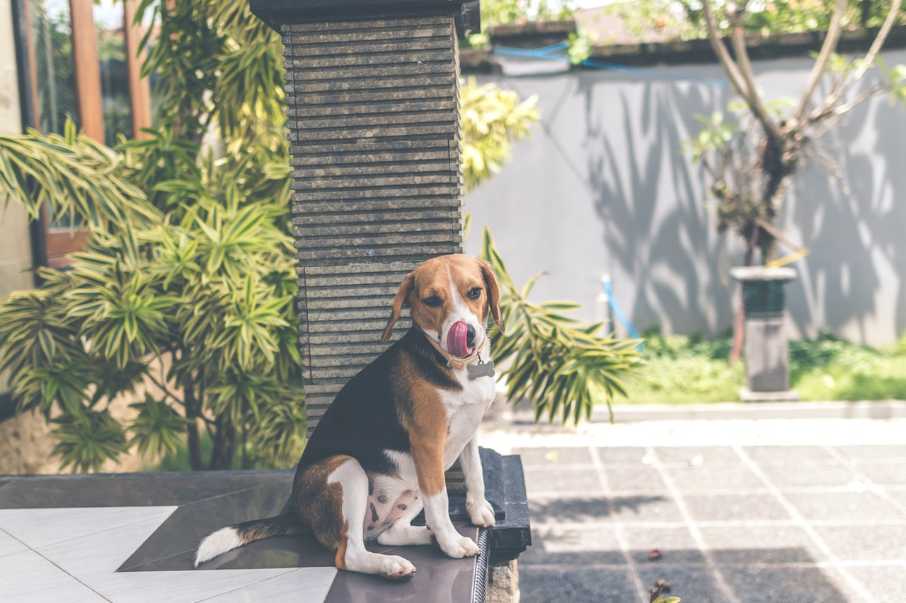 beagle dog toys