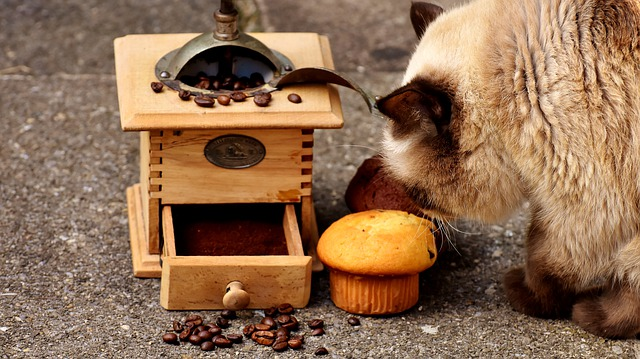 foods cats can't eat
