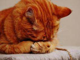 feline grief 1