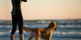 dealing with pet loss