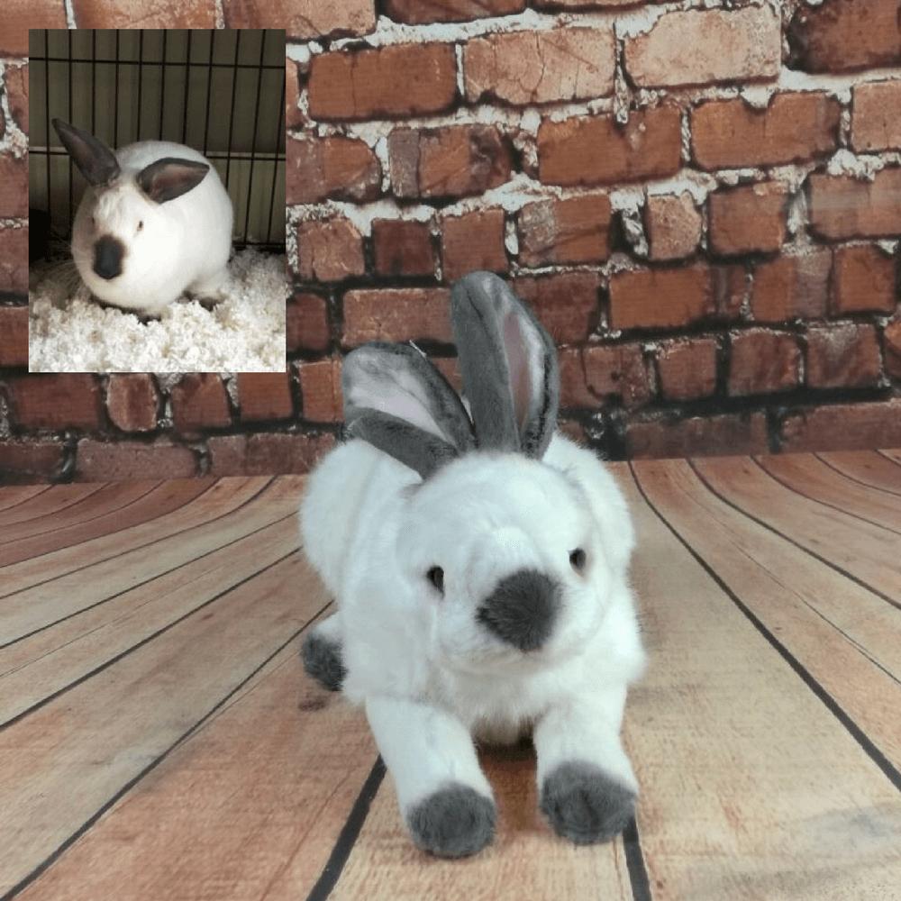custom bunny stuffed animal