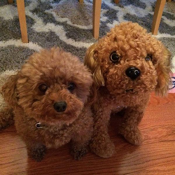 poodle stuffed animal
