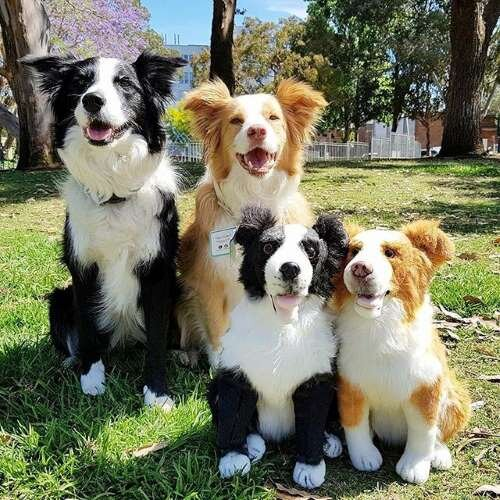 Border Collie Stuffed Animal Plush Lookalike