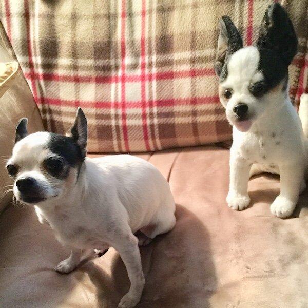 Personalized Chihuahua Stuffed Animal Plush Lookalike 7
