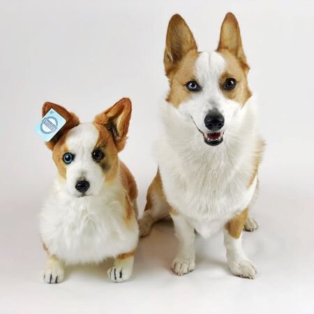 forevers corgi plush