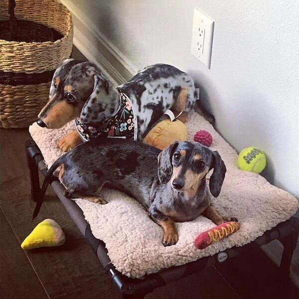 dachshund stuffed animal