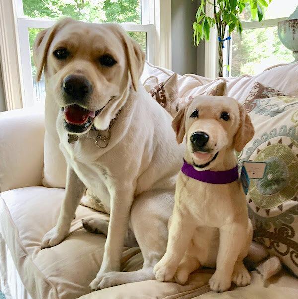 Personalized Labrador Stuffed Animal Plush Lookalike 8