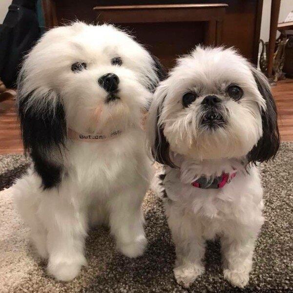 Shih Tzu Stuffed Animal Plush
