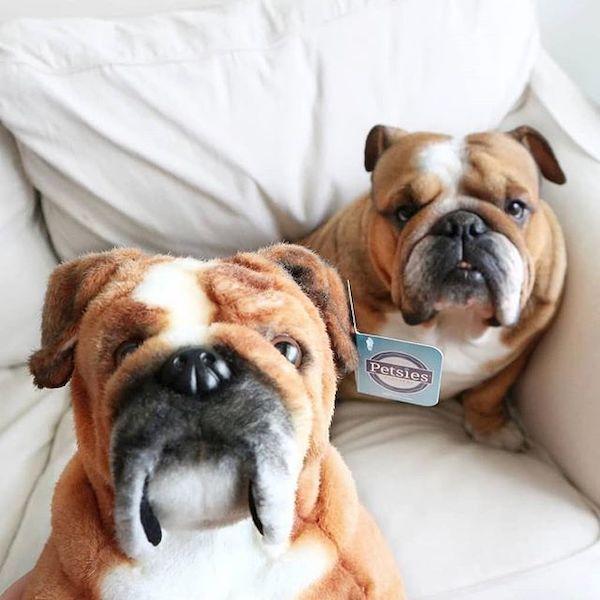 bulldog-stuffed-animal-plush 8