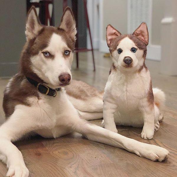 Personalized Husky Stuffed Animal Plush Lookalike 8