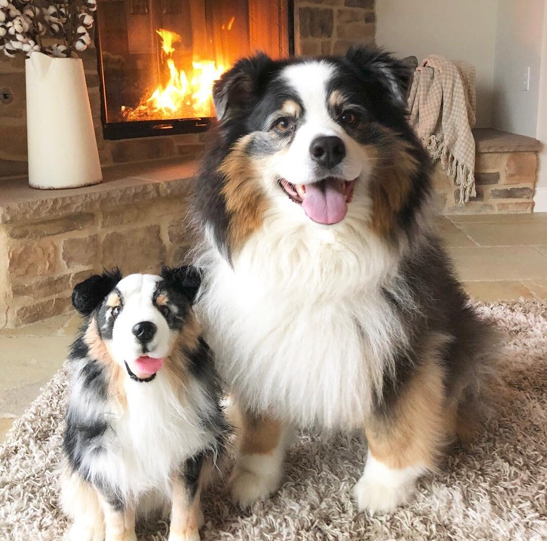Australian Shepherds plushies
