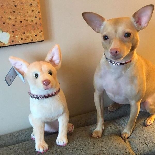 Chihuahua Stuffed Animal Plush