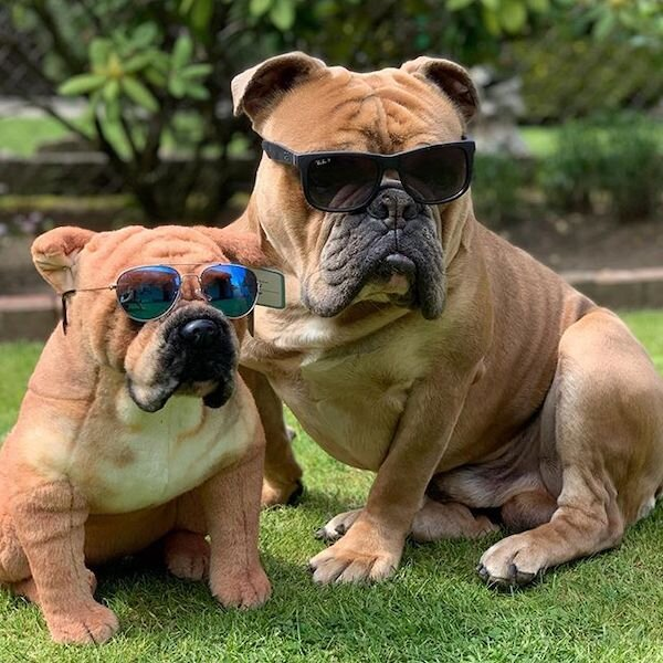 custom dog stuffed animals