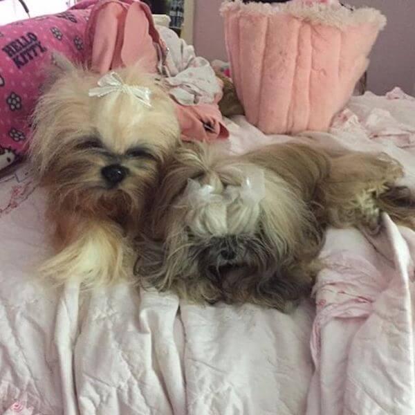 realistic dog stuffed animal