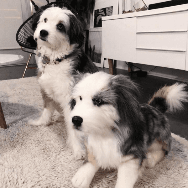 australian shepherd stuffed animal 4