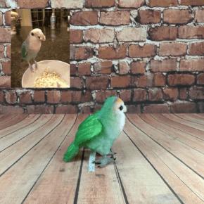 Custom Stuffed Plush Birds