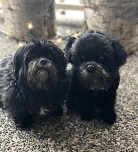 Shih Tzu Photo Stuffed Animal Replica