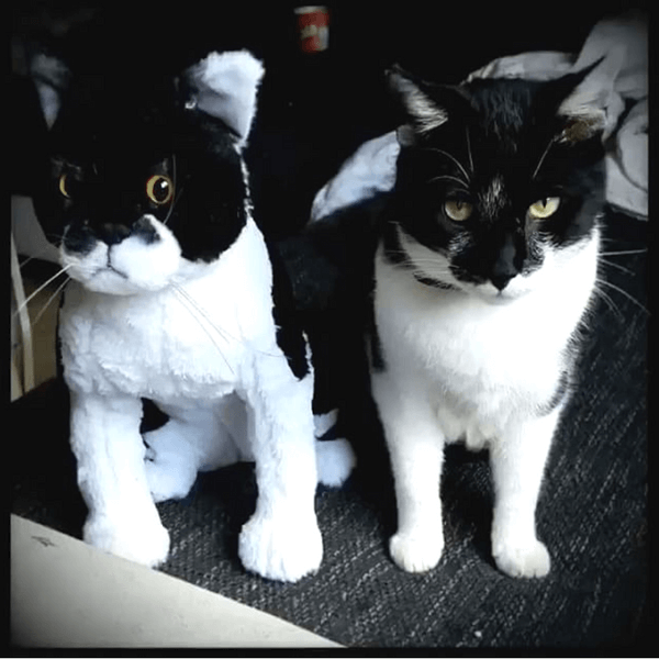 black and white cat plush
