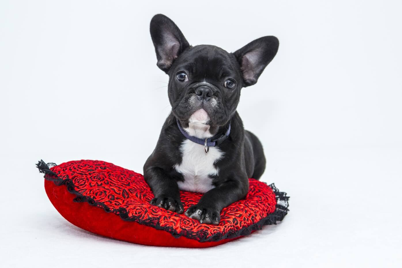 French Bulldog Stuffed Animal