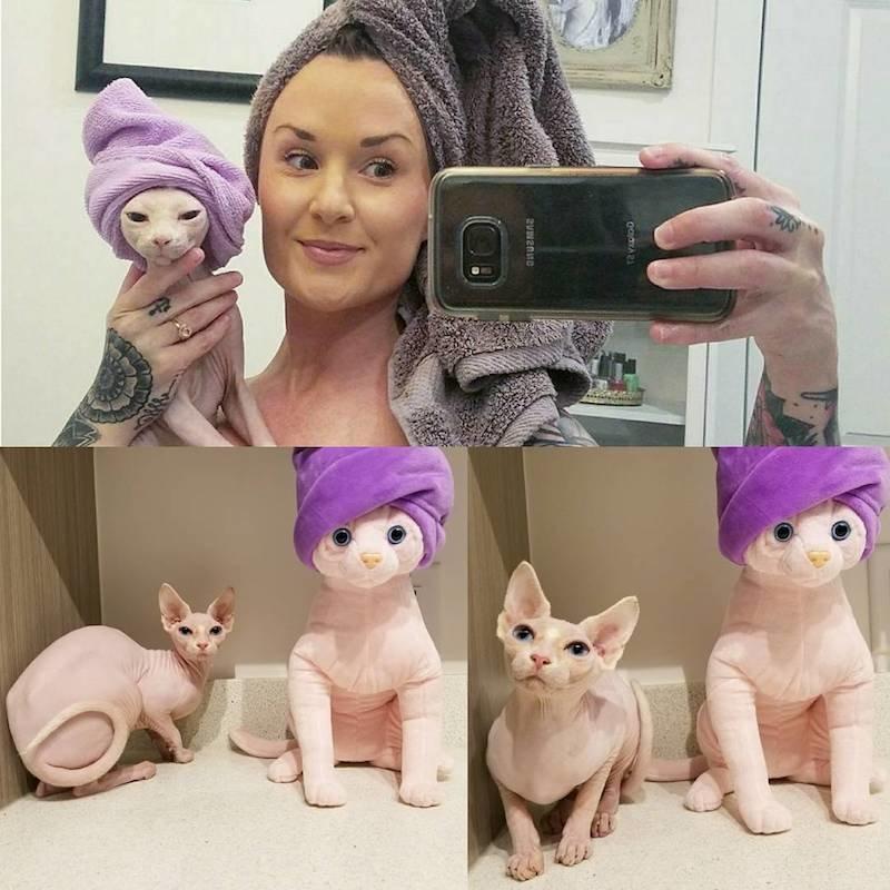 hairless cat stuffed animal