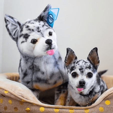 Chihuahua Stuffed Animals Turn Your Pet Into Custom Plush
