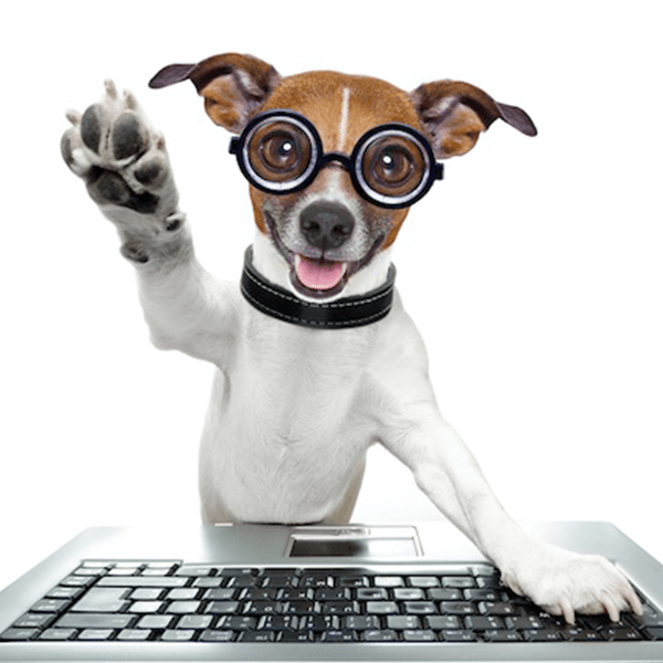 send pet picture