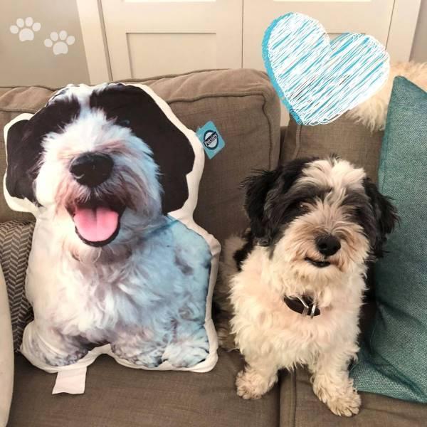 dog super soft pet petsies pillow