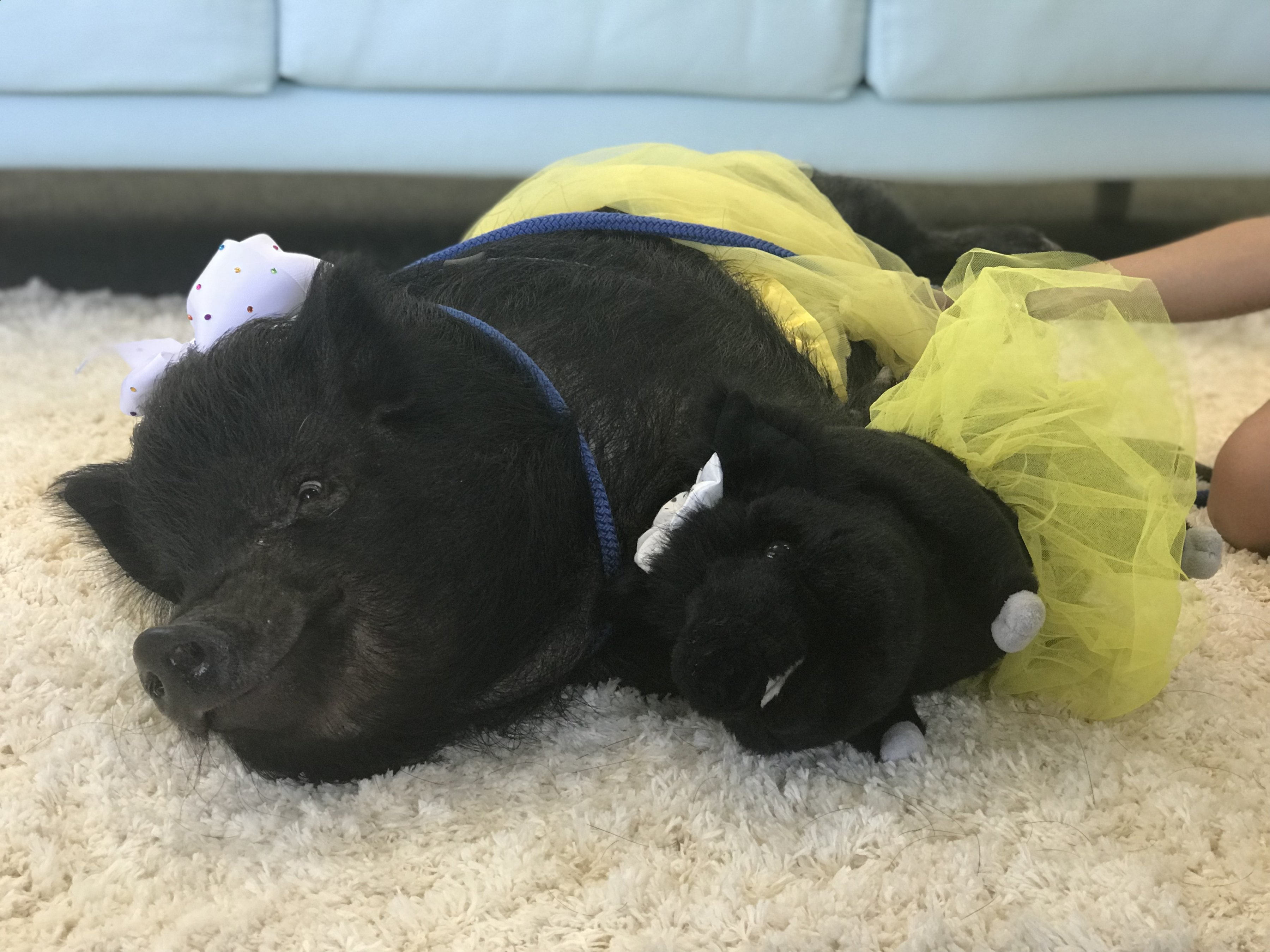 custom pig stuffed animal