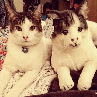 cat stuffed animal