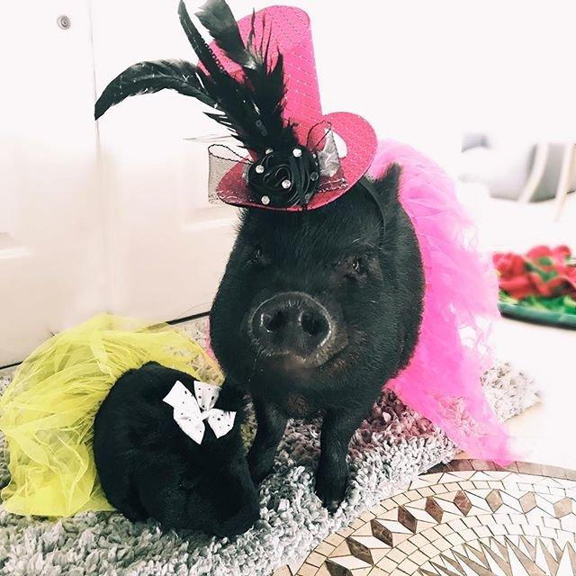custom pig stuffed animals