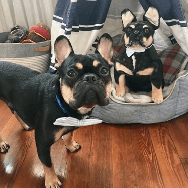 Frenchie stuffed animal
