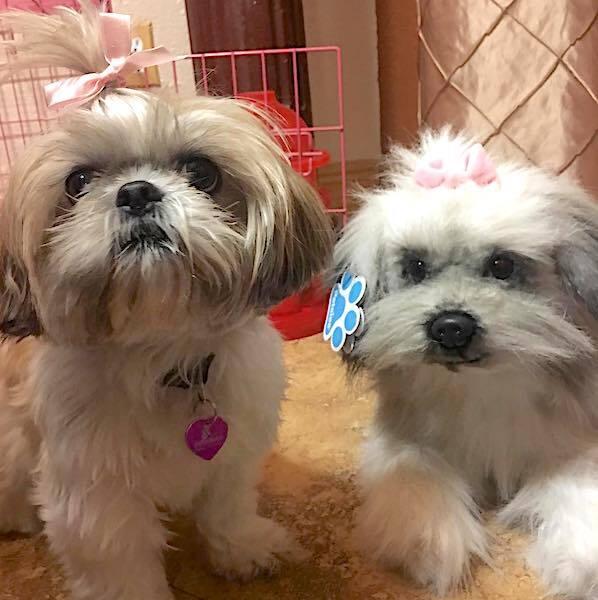 Shih Tzu Stuffed Animal Plush 5