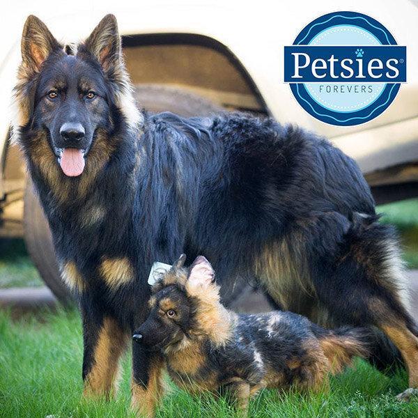 Custom German Shepherd Stuffed Animals Petsies Official Site