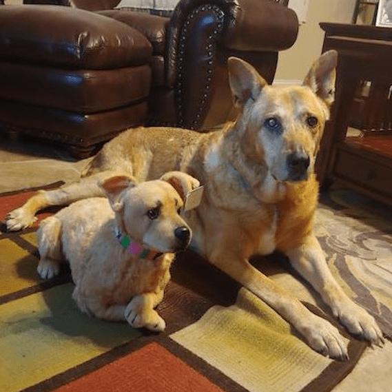 german shepherd stuffed animal 3