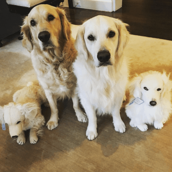 Custom Golden Retriever Stuffed Animals Petsies Official Site