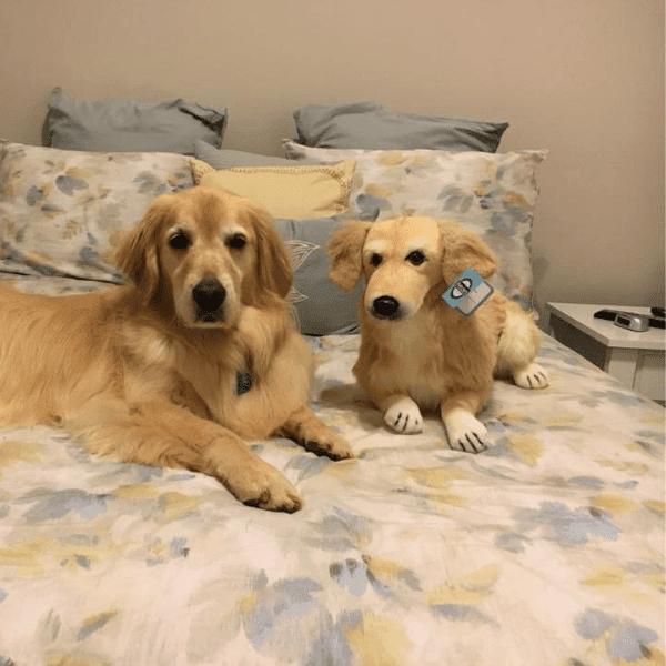 golden-retriever-stuffed-animal-1