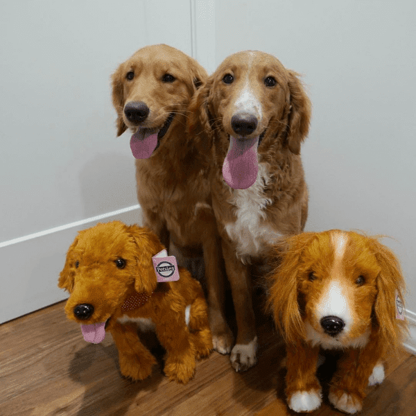 golden-retriever-stuffed-animal-2
