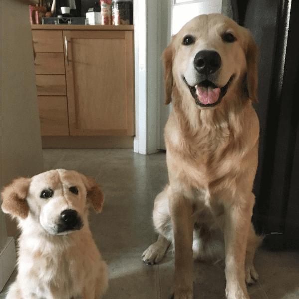 golden-retriever-stuffed-animal-3