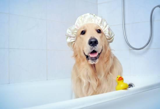 Personalized Dog Stuffed Animal Plush Lookalike