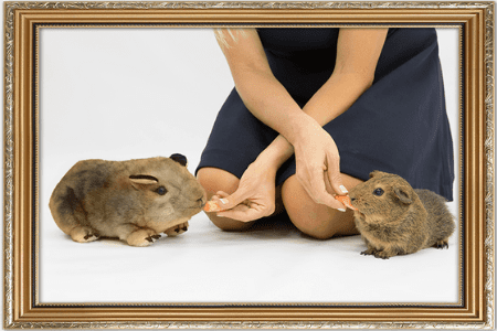 turn hamster into stuffed animal