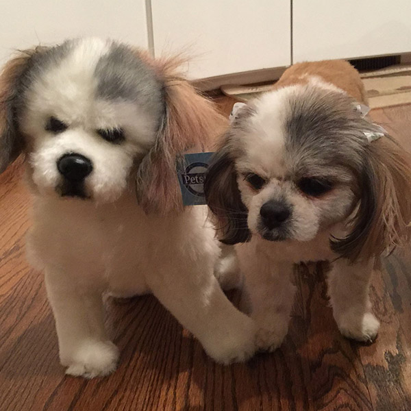 realistic stuffed animal of your dog