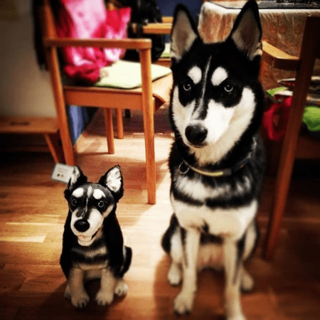 Husky Plush of Your Pet