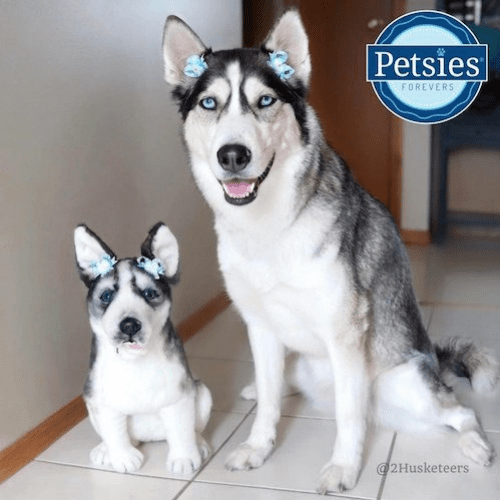 Husky Forever Stuffed Animal Lookalike